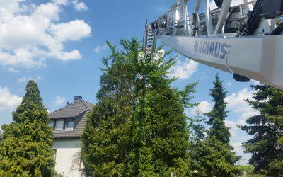 085 – 20.06.2017 – Katze auf Baum – Ramstein