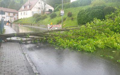 078 – 27.04.2019 – Baum über Straße – Kottweiler