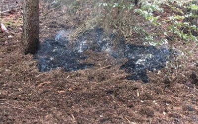 224 – 27.07.20 19 – Feuer im Wald – Ramstein