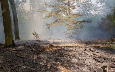 Waldbrand Hochspeyer