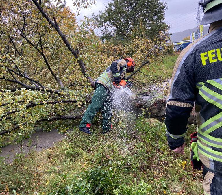 188 – 21.10.2021 – umgestürzter Baum –  L356
